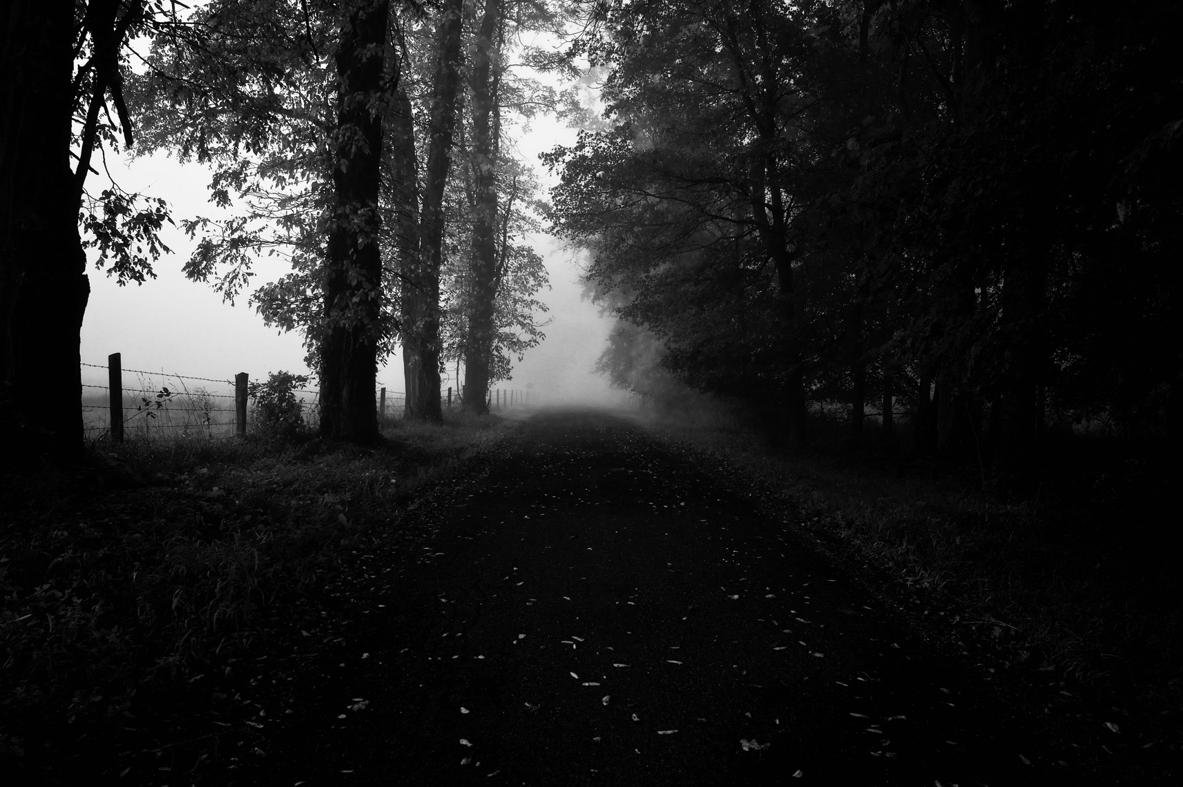 Foggy-Road-webres