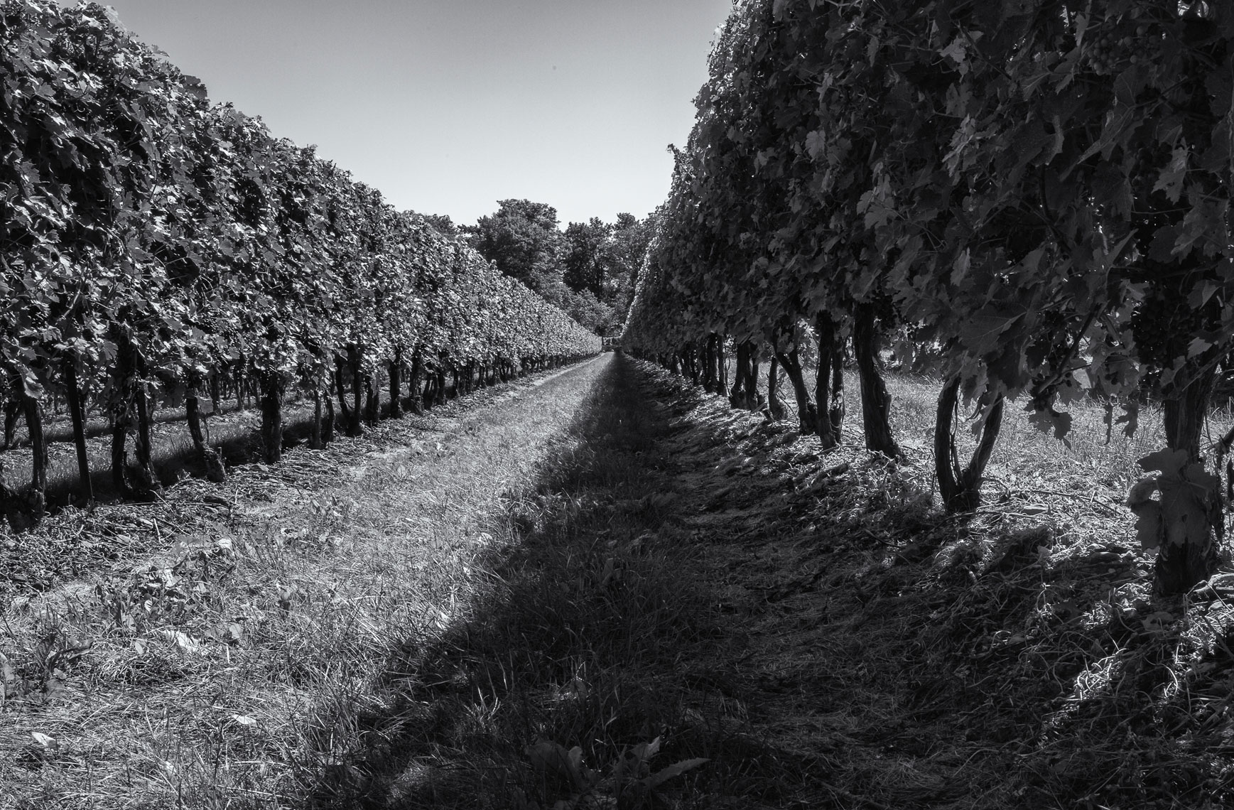 Peller-Vineyard-Perspective-webres