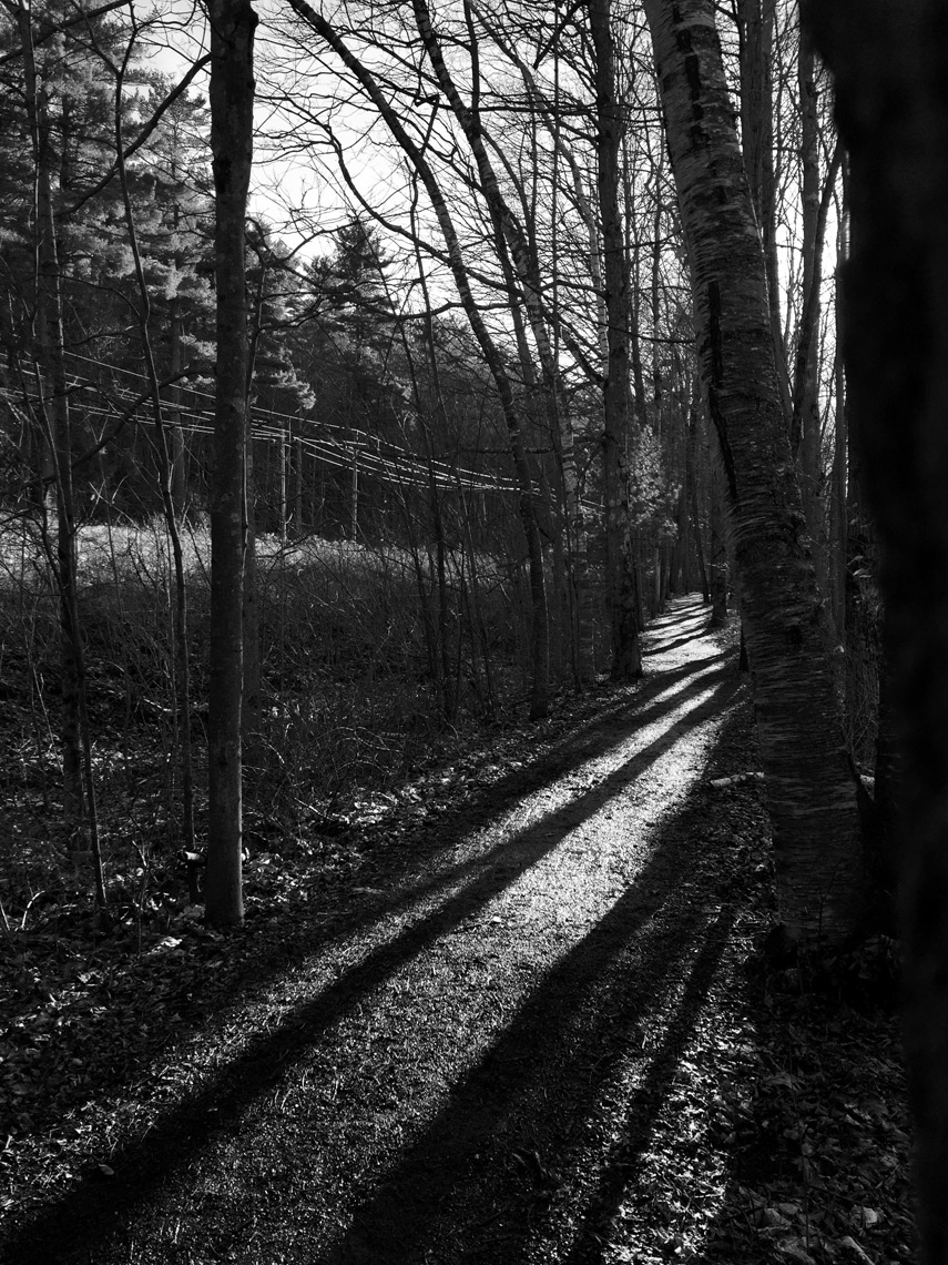 Stockbridge_trail_shadows-webres
